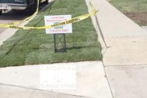 Photo #14: Yard Maintenance by Cardenas Gardening