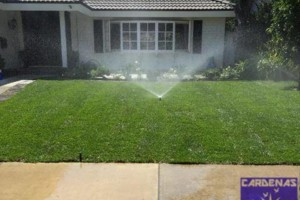 Photo #12: Yard Maintenance by Cardenas Gardening