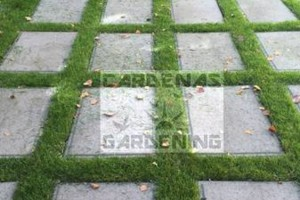 Photo #8: Yard Maintenance by Cardenas Gardening