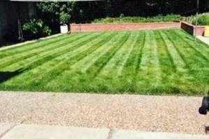 Photo #7: Yard Maintenance by Cardenas Gardening