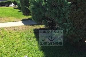 Photo #4: Yard Maintenance by Cardenas Gardening