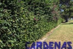 Photo #2: Yard Maintenance by Cardenas Gardening