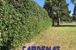 Photo #1: Yard Maintenance by Cardenas Gardening