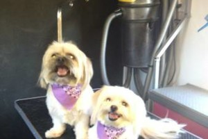 Photo #1: Pooch Paradise Spa - Mobile Dog Grooming