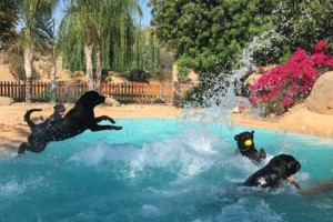 Photo #23: Resort Style Boarding and Daycare/ Topline K9 Services