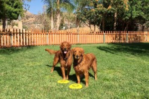 Photo #22: Resort Style Boarding and Daycare/ Topline K9 Services