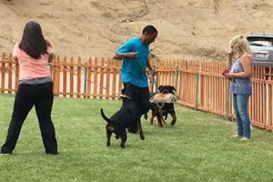 Photo #21: Resort Style Boarding and Daycare/ Topline K9 Services