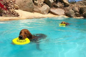 Photo #18: Resort Style Boarding and Daycare/ Topline K9 Services