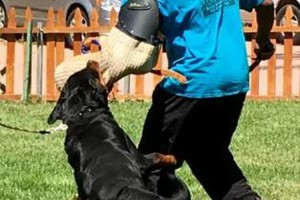 Photo #17: Resort Style Boarding and Daycare/ Topline K9 Services