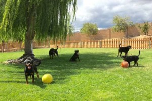 Photo #16: Resort Style Boarding and Daycare/ Topline K9 Services
