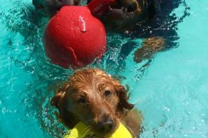 Photo #15: Resort Style Boarding and Daycare/ Topline K9 Services