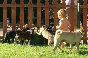 Photo #14: Resort Style Boarding and Daycare/ Topline K9 Services