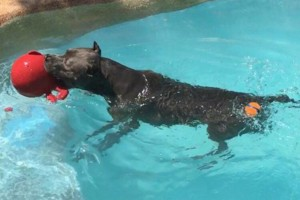 Photo #13: Resort Style Boarding and Daycare/ Topline K9 Services