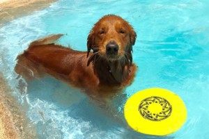 Photo #11: Resort Style Boarding and Daycare/ Topline K9 Services