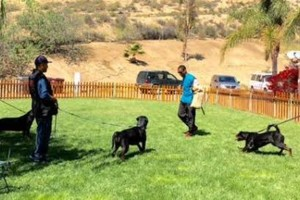 Photo #10: Resort Style Boarding and Daycare/ Topline K9 Services
