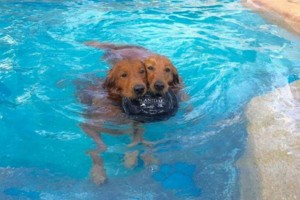 Photo #7: Resort Style Boarding and Daycare/ Topline K9 Services