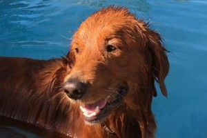Photo #6: Resort Style Boarding and Daycare/ Topline K9 Services