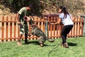 Photo #5: Resort Style Boarding and Daycare/ Topline K9 Services