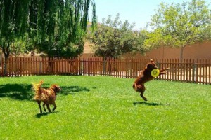 Photo #3: Resort Style Boarding and Daycare/ Topline K9 Services