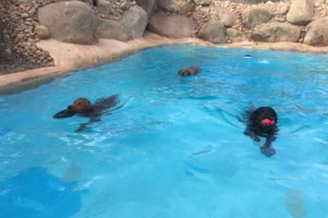 Photo #2: Resort Style Boarding and Daycare/ Topline K9 Services