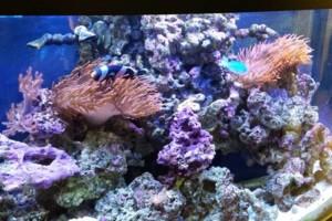 Photo #5: Fish Guy Russ. Fish tank cleaning / Aquarium maintenance