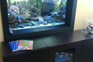 Photo #3: Fish Guy Russ. Fish tank cleaning / Aquarium maintenance