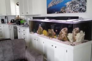 Photo #2: Fish Guy Russ. Fish tank cleaning / Aquarium maintenance