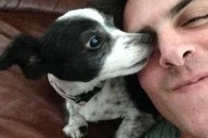 Photo #2: Dog walker/Jogger for reasonable fee!