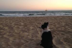 Photo #1: Dog walker/Jogger for reasonable fee!