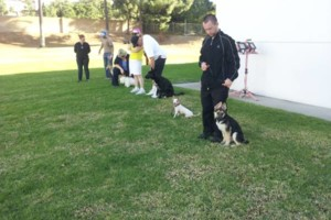 Photo #5: CERTIFIED DOG TRAINER