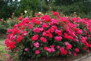 Photo #1: Princeton Lawn and Landscape