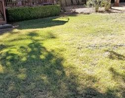 Photo #4: Landscape Maintanence (mowing, leaf blowing, weed eating)