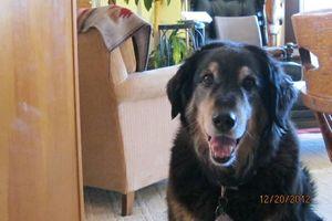 Photo #2: Lake Tahoe PET SITTER/DOG WALKER