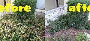 Photo #1: Yard clean up services - top quality work!