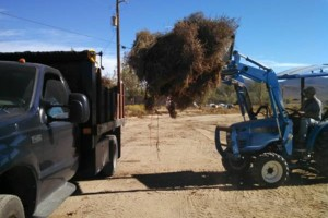 Photo #2: Manure Removal Service