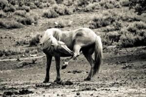Photo #6: Pasture Boarding - $125 per month