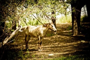 Photo #5: Pasture Boarding - $125 per month
