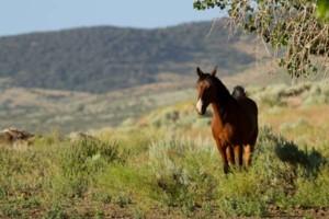 Photo #4: Pasture Boarding - $125 per month