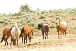 Photo #3: Pasture Boarding - $125 per month