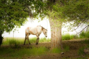 Photo #2: Pasture Boarding - $125 per month