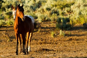 Photo #1: Pasture Boarding - $125 per month