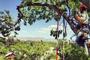 Photo #1: Tree service - trimming, removals, and planting