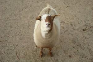 Photo #23: Pet Care (Safe at Home Pet Sitting)