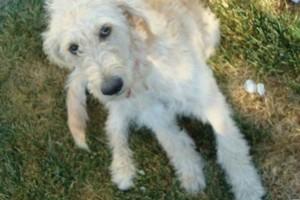 Photo #19: Pet Care (Safe at Home Pet Sitting)