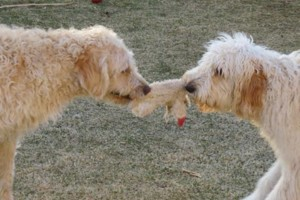 Photo #17: Pet Care (Safe at Home Pet Sitting)