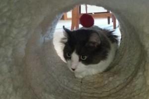 Photo #16: Pet Care (Safe at Home Pet Sitting)