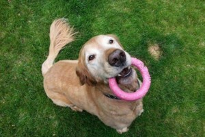 Photo #15: Pet Care (Safe at Home Pet Sitting)