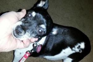 Photo #13: Pet Care (Safe at Home Pet Sitting)