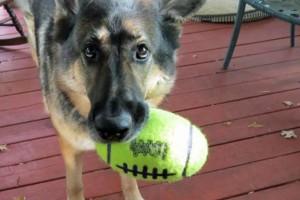 Photo #10: Pet Care (Safe at Home Pet Sitting)