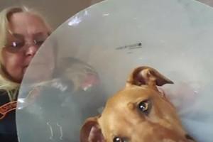 Photo #8: Pet Care (Safe at Home Pet Sitting)